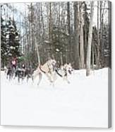 On The Race Trail Canvas Print