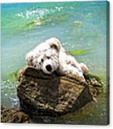 On The Rocks - Teddy Bear Art By William Patrick And Sharon Cummings Canvas Print