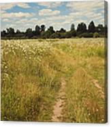 On The Summer Meadow. Russia Canvas Print