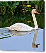 On The Swanny River Canvas Print