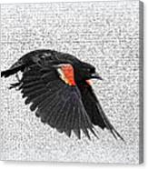 On The Wing - Red-winged Blackbird Canvas Print