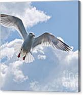 On The Wings Of A Gull Canvas Print