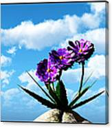 On Top Of The World... Canvas Print