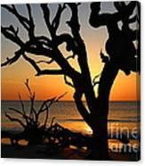 Once A Mighty Oak Canvas Print
