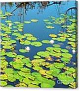 Once Upon A Lily Pad Canvas Print