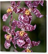 Oncidium Canvas Print