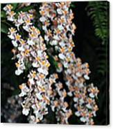Oncidium Twinkle Fragrance Fantasy Canvas Print