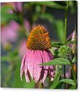One Among The Coneflowers Canvas Print