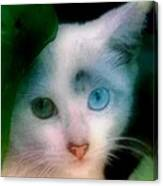 One Blue One Green Cat In New Olreans Canvas Print