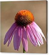 One Coneflower Canvas Print