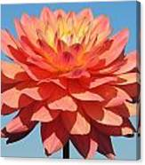 One Dalia Canvas Print