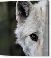 One Eye Wolf Canvas Print