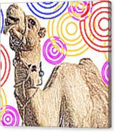 One Funky Camel Canvas Print