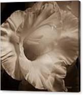 One Gladiola Canvas Print