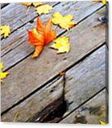 One Golden Leaf Canvas Print