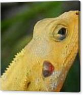 One Happy Lizard Canvas Print