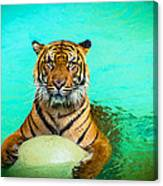 One Kool Cat Canvas Print