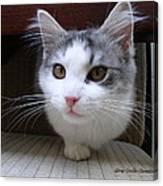 One Legged Kitty Canvas Print