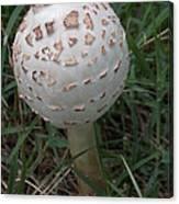 One Little Mushroom Canvas Print