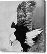 One Of My Eagles Canvas Print