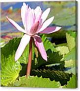 One Pink Water Lily Canvas Print