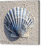 One Shell Canvas Print