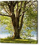 One Spring Tree Canvas Print