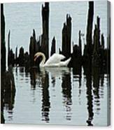 One Swan Canvas Print
