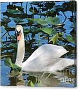 One Swan In The Lilies Canvas Print