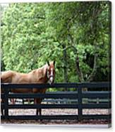 One Very Pretty Hilton Head Island Horse Canvas Print