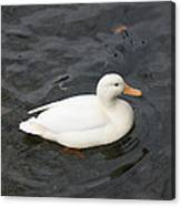 One White Duck Canvas Print