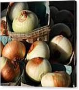 Onions 2 Canvas Print