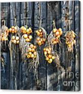 Onions And Barnboard Canvas Print
