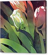 Only Three Tulips Canvas Print