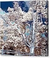 Ontario Summer Color Infrared Canvas Print