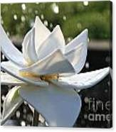 Opaque Lily Canvas Print