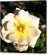 Open Flower Canvas Print