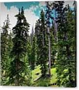 Open Subalpine Forest Canvas Print