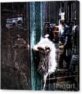 Opossum In The City Canvas Print