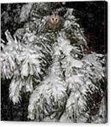 Opossum In The Pines Canvas Print