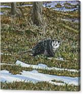 Opossum  Canvas Print
