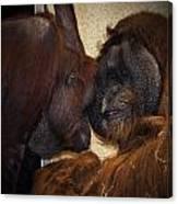 Orangatang Love Canvas Print