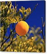 Orange And Blue Sky Canvas Print