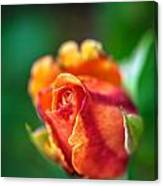 Orange And Fuschia Rosebud Canvas Print