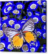 Orange And Gray Butterfly Canvas Print