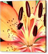 Orange And Pink Flower Canvas Print