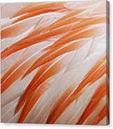 Orange And White Feathers Of A Flamingo Canvas Print