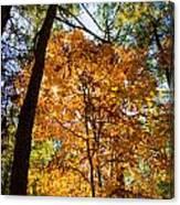 Orange Autumn II Canvas Print