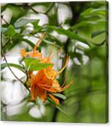 Orange Azalea Delight Canvas Print