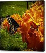 Orange Azalea Canvas Print
